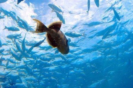 水下餐厅就餐赏海底生物